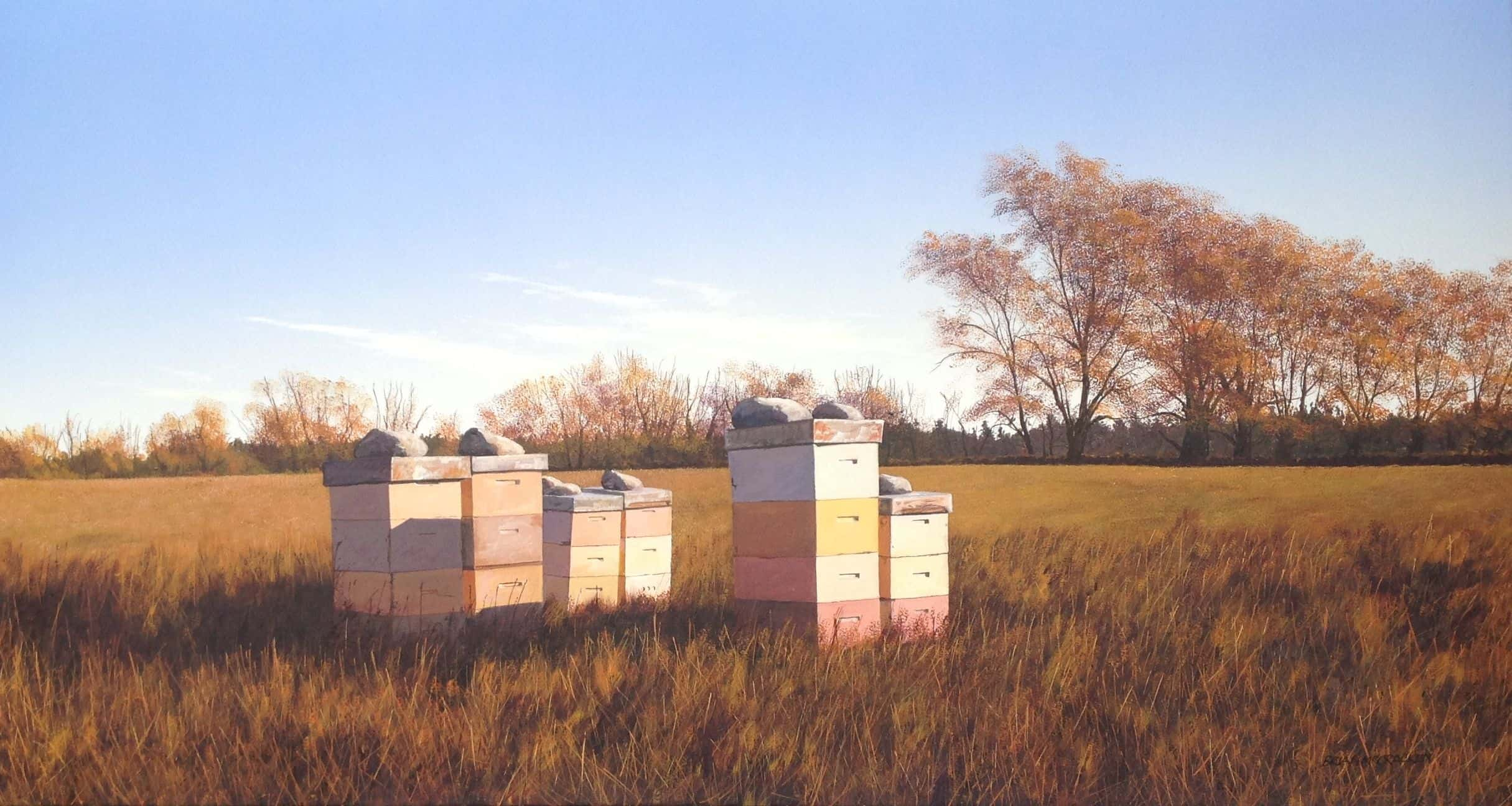 Beehives in Autumn  Evening, Fernside, North Canterbury